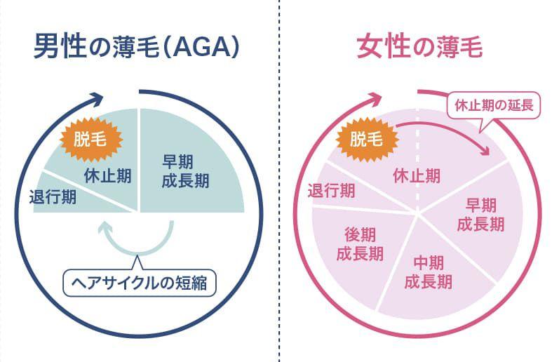 ヘアサイクル(毛周期)が乱れる原因【FAGA基礎知識】